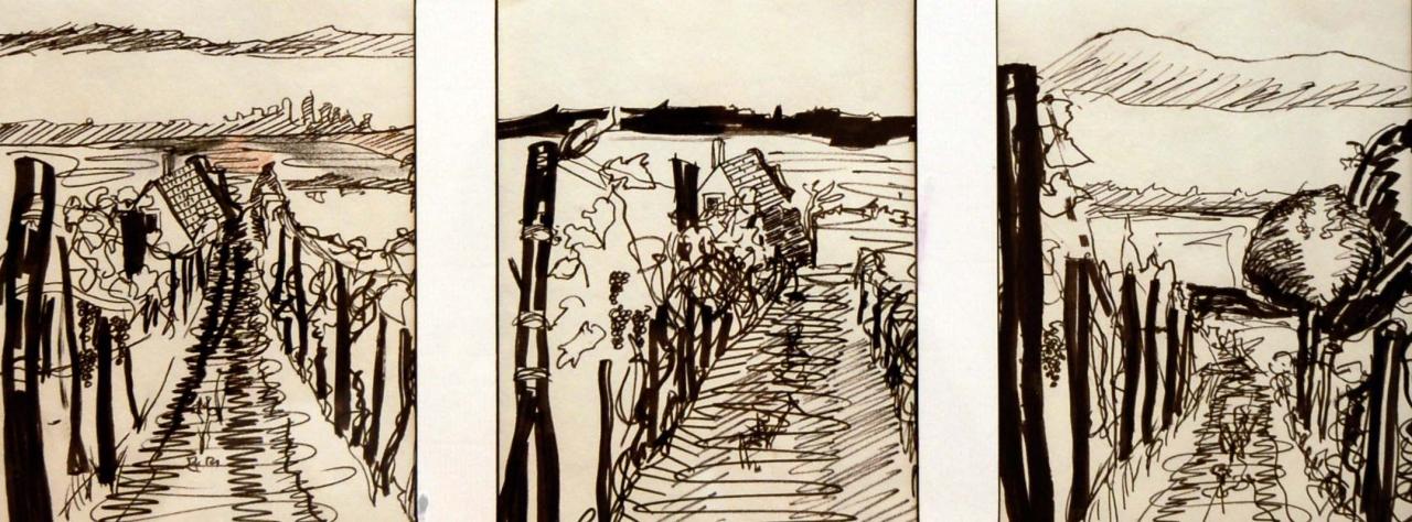 3 Skizzen von Weinberg in Ungarn